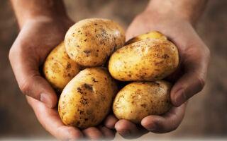 Как вывести бородавку картошкой