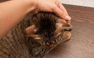 Какими видами лишая можно заразиться от кошек