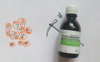 Хлорофиллипт — эффективное средство от стафилококка