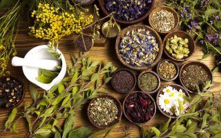 Лечение псориаза травами — фитотерапия заболевания
