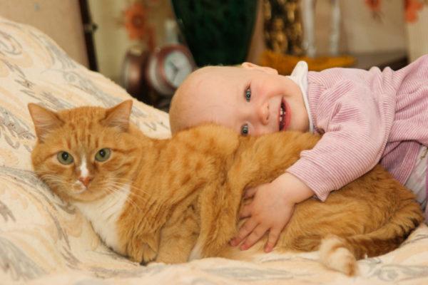 Заражение стафилококком от кошки