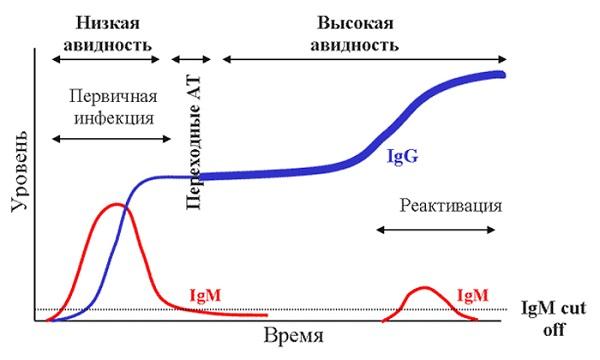 Схема получения данных по анализам