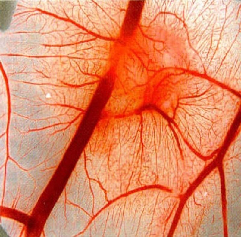 Разрыв стенок мелких кровеносных сосудов