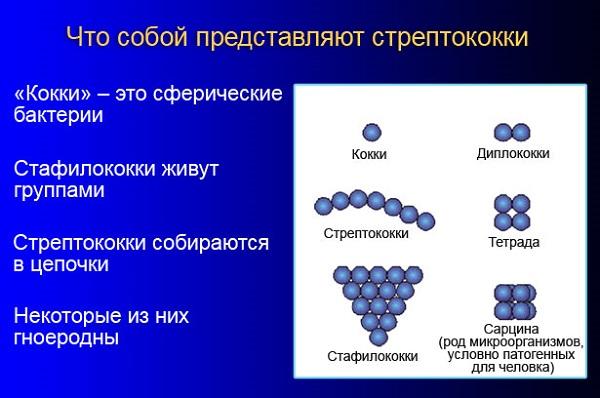 Что собой представляют стрептококки