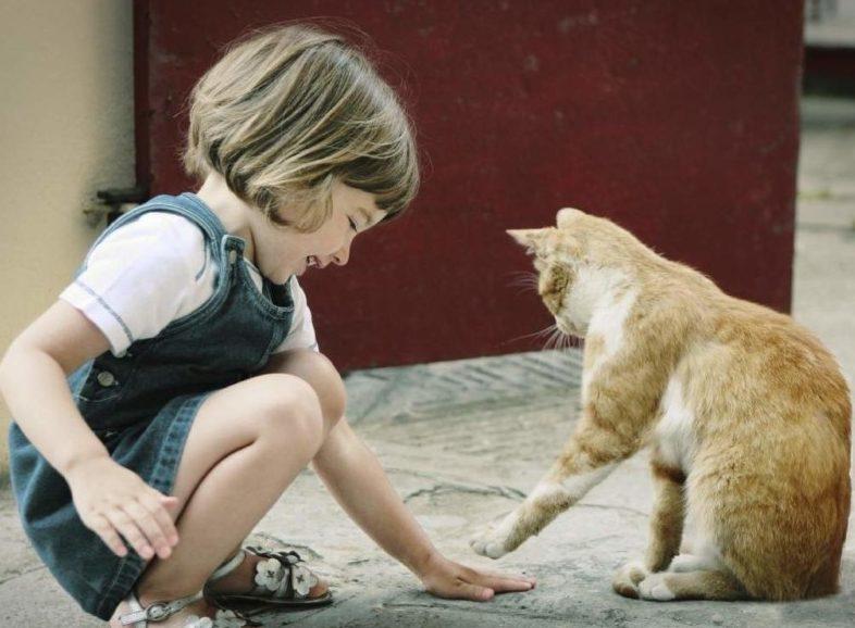 Заражение лишаем от животных