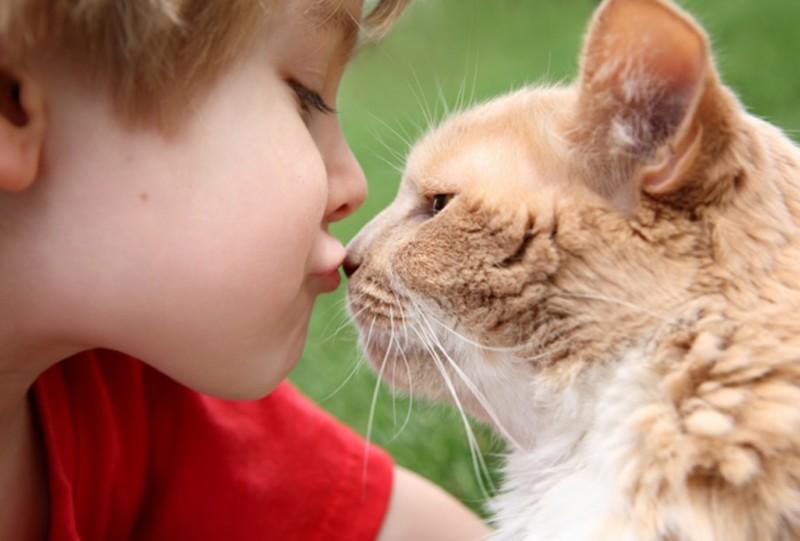 Заражение может произойти при контакте с больным животным