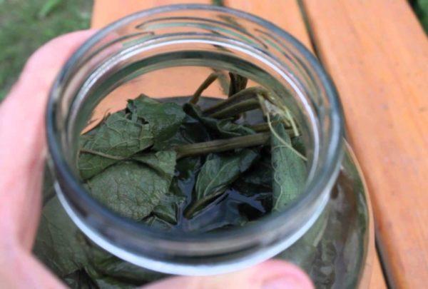 Отвар листьев лопуха