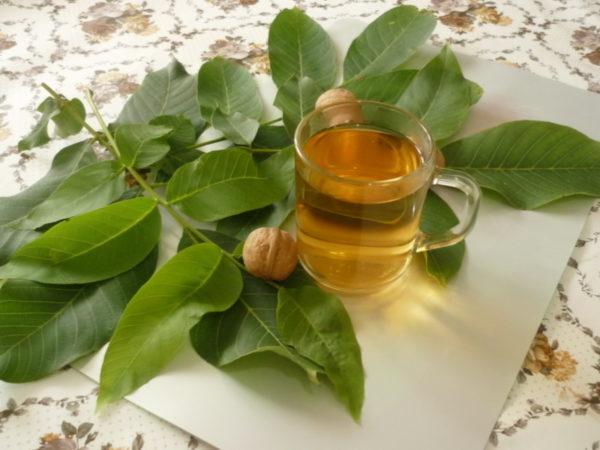 Отвар листьев ореха