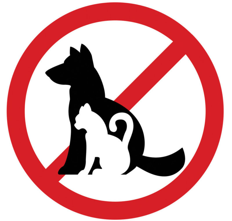 Домашние животные являются источниками заражения лишая