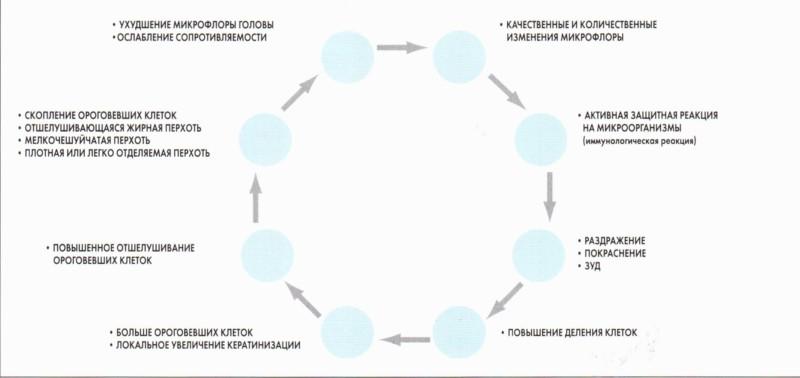 Механизм развития перхоти