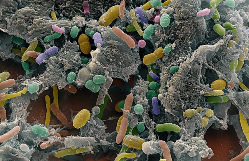 Активность бактерий