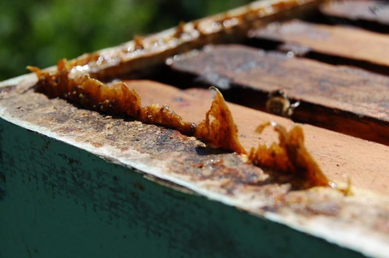 Прополис-пчелиный клей