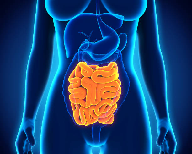 Нарушения работы тонкого кишечника