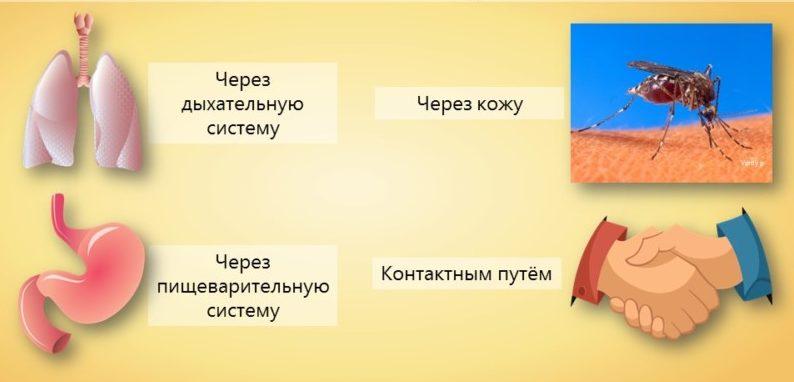 Пути заражения инфекционным дерматитом